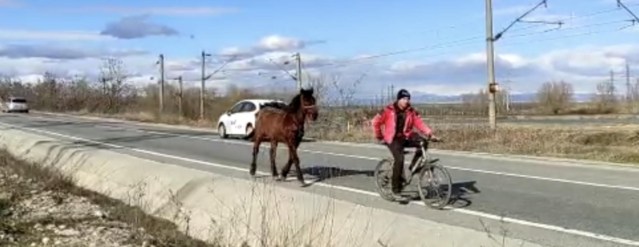 VIDEO. Calul de la bicicletă. Doar o imagine a sărăciei în pandemie, dar numai asta?