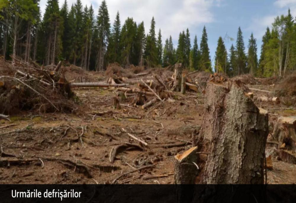 Culisele statului paralel – Cum îi intimidează mafia lemnului pe păduri și activiști de mediu