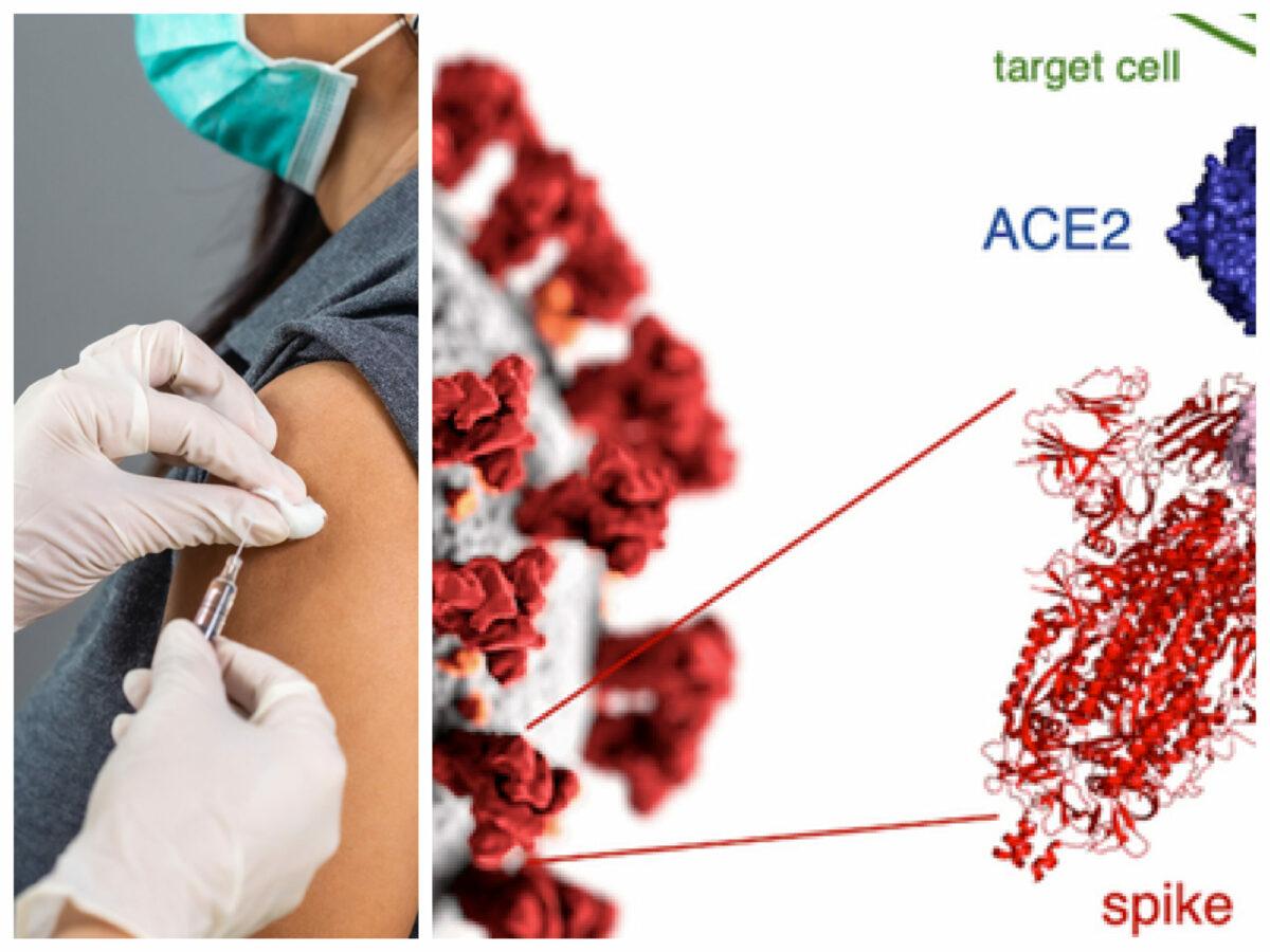 """Tulpina indiană intră în Italia. A luat virusul fața vaccinării, prin varianta """"dublu mutantă""""? Lumea, în alertă"""